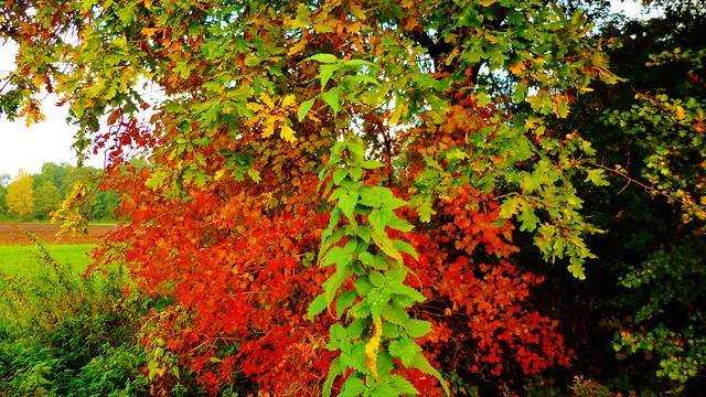 Autumn Stinging Nettle\Brennessel