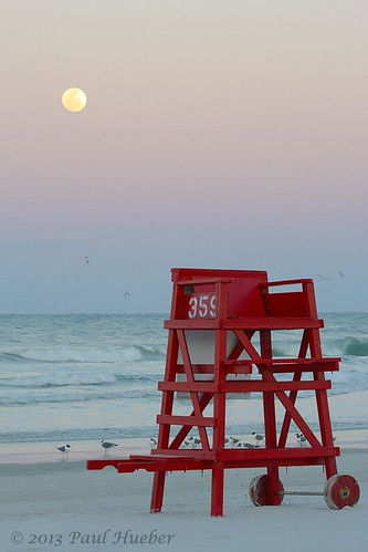 lifeguardchair moon laughinggull leucophaeusatricilla daytonabeach volusiacounty centralflorida handheld canonef100400mmf4556lisusm ocean animal florida wildlife nature bird aves canon orlando usa america unitedstates outside water agua daytona spring march 2013