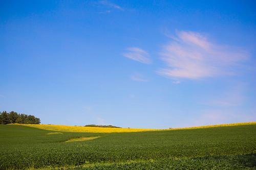 field sunflower monkton maryland unitedstates 6d canon