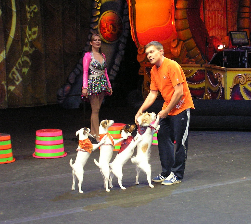 Ringling Bros  Circus 11-24-12 | This dog show was part of t