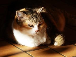 si le paradis des chats existe minouche l 39 a rejoint flickr. Black Bedroom Furniture Sets. Home Design Ideas