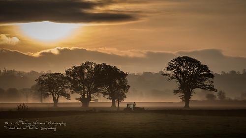 trees tractor sunrise canon landscape photography countryside morningmist midwales welshpool belan