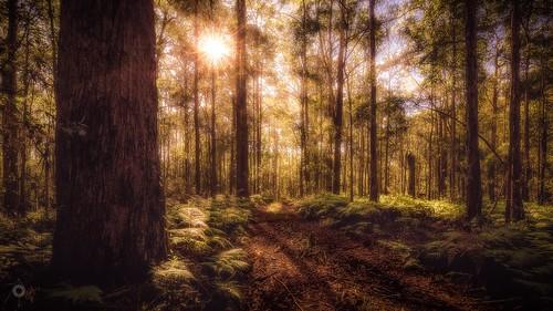 australia bracketedexposure canon eucalypts ferns forest hdr landscape leaves leefilters queensland sun sunshinecoast trees