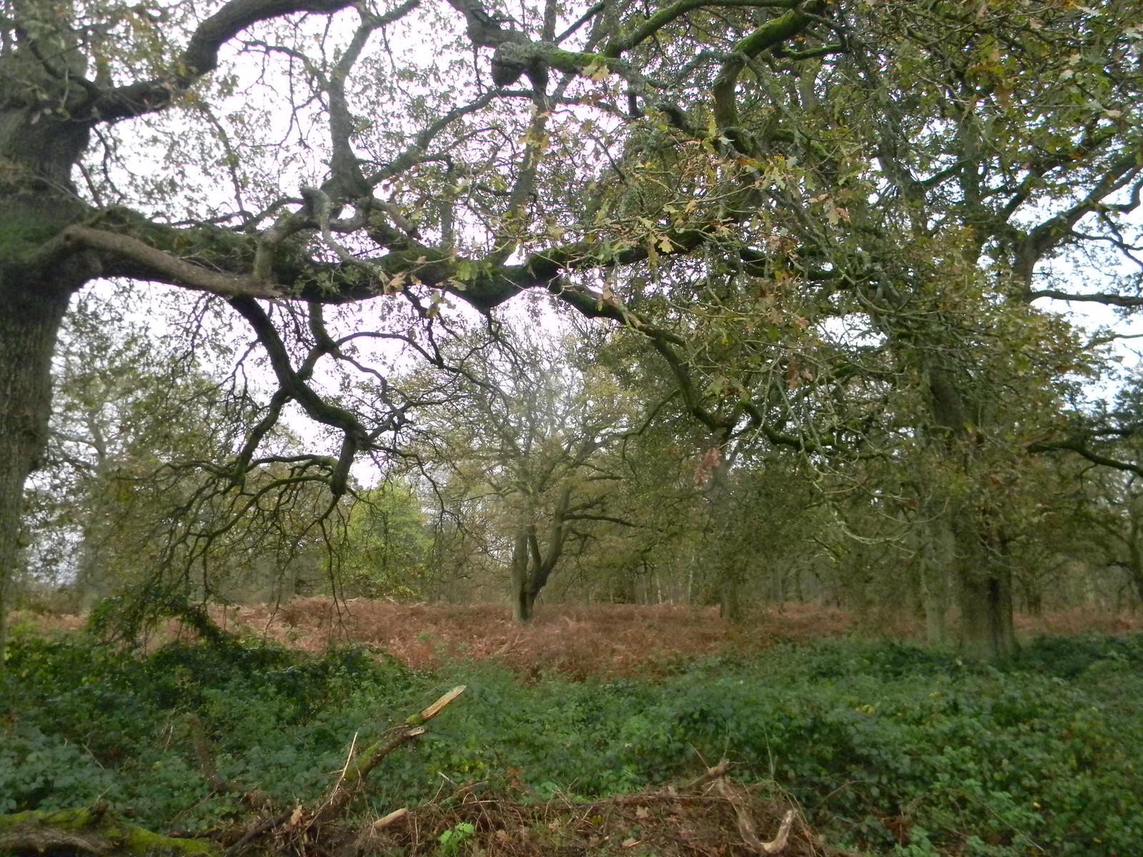 Trees n leaves Milford to Godalming
