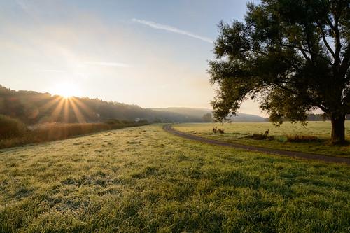 natur sunrise commuting cycling dresden sachsen deutschland de sunstar flare earlymorning d800 fog trees bluehour bluesky goldenhour landscapes landscape travel