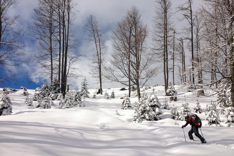 Řídký lesík vede od Stagneralm až k vrcholu.