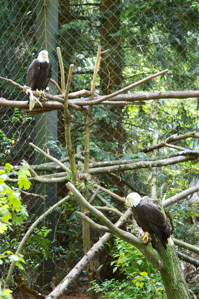 Oregon Zoo: Photos Taken At The Oregon Zoo In Portland