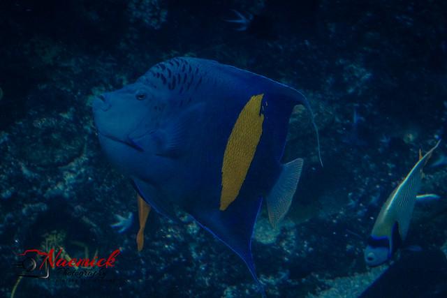 Sea World, QLD-0125.jpg