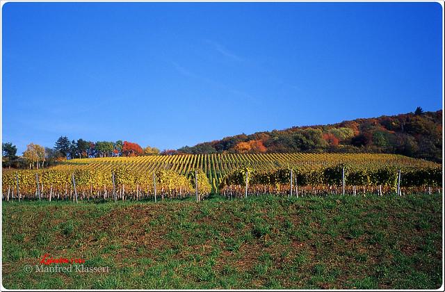 © • Weinberge im Herbst •