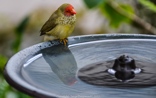 usa reflection bird florida butterflyworld coconutcreek nikkor1802000mmf3556 nikond5100 ©sergedaigneault