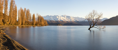 wanaka tree lake sunrise