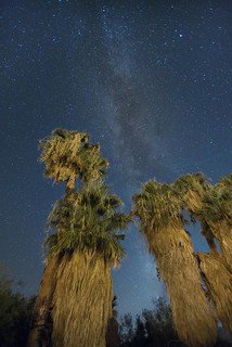 Palm trees at the Oasis of Mara at night | by Joshua Tree National Park