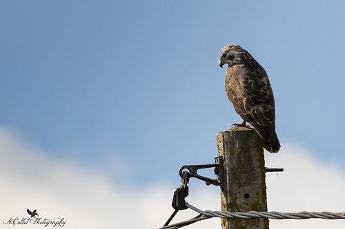 Buse variable | by www.nicolascollet.com