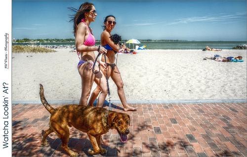 beach dogs virginia nikon gimp yorktown swimsuit hdr luminance qtpfsgui d7100 nikkor18105mmvr