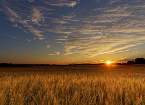 barley field landscape perthshire scotland sunrise sky