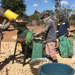 A young group offer mechanized shelling services to smallholder farmers in rural Zimbabwe