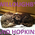 19Willoughby and Hopkins