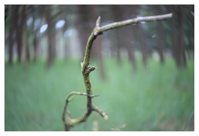 Old branch