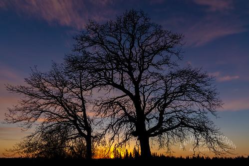 sunset usa tree silhouette washington sundown raja ridgefield 2015