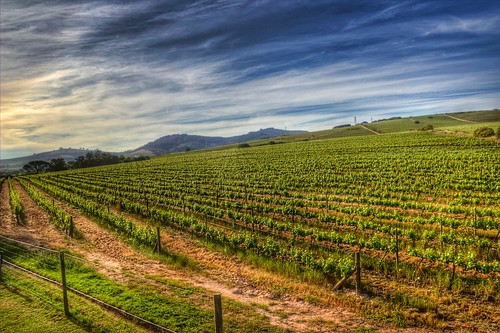 light green nature fruit southafrica colorful wine winery contrasts hdr photomatix canon600d snapseed