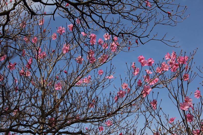 2014-05-06_02456_九州登山旅行.jpg