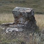 Petrified tree on Specimen Ridge