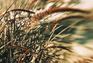 Desert grass with Lensbaby | by kevin dooley