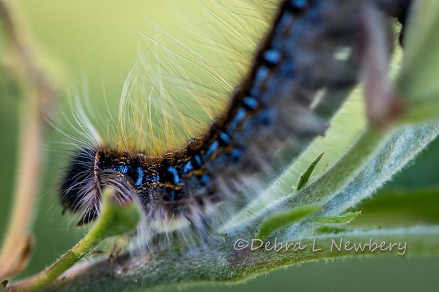 Caterpillar Closeup