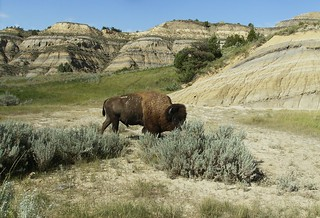 Theodore Roosevelt National Park-North Unit | by jaygannett