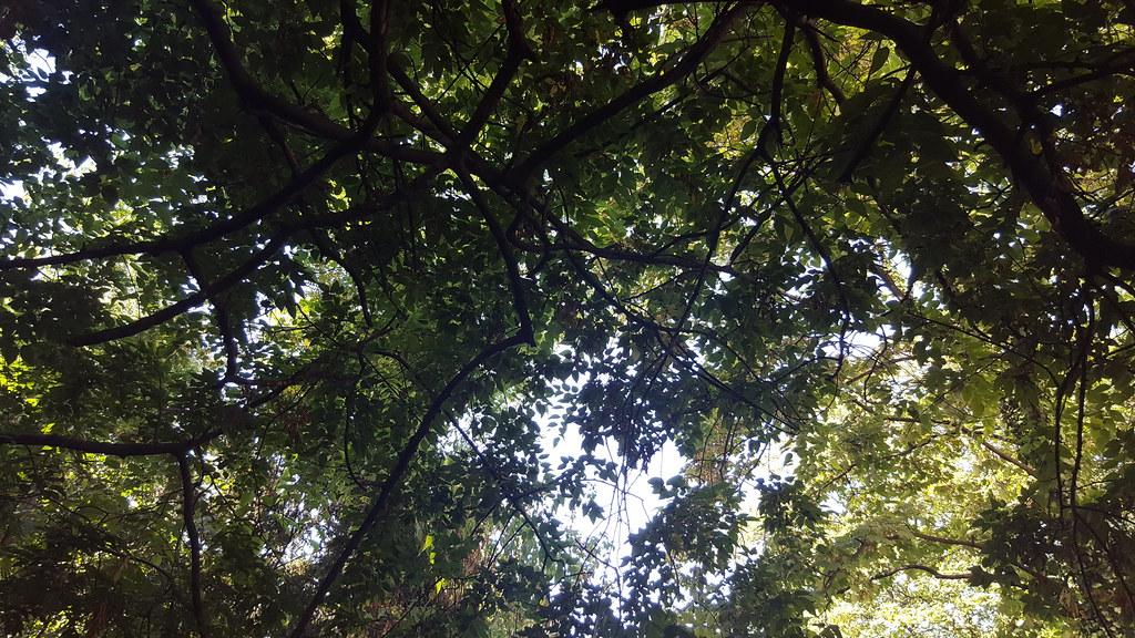 Jardin Sauvage Saint Vincent Uploaded With Flickr Uploader Flickr