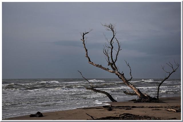 L'arbre marin I
