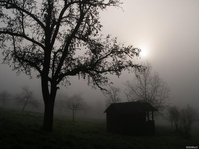 Gartenhaus mit Obstwiese im Nebel