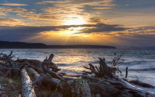 sunrise landscape water logs shore camanoislandstatepark pacificnorthwest outdoors nature clouds canoneos5dmarkiii scenic morning canonef2470mmf28lusm washington johnwestrock