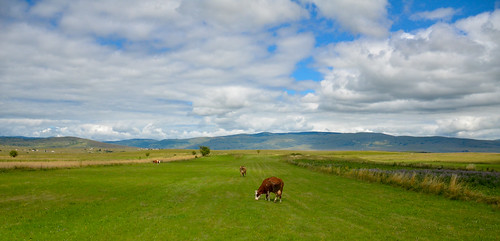 weather cows cloudy bosnia bosna glamoc projectweather kovacevci
