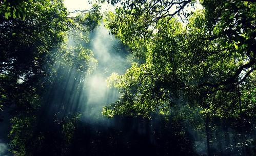light tree crossprocess smoke