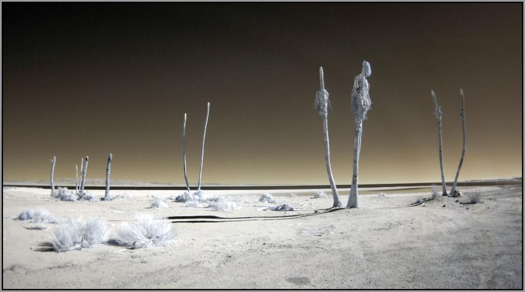 Dead Shoreline Trees