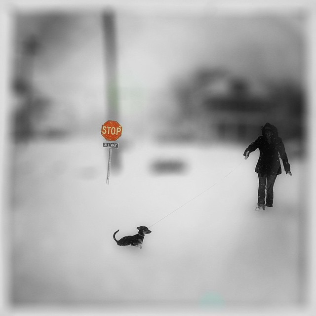 Picture edited with #ColorStrokes #Stop #Snow #puppy #bw #Hipstafiend #iphonography #iPhoneography #igers #iPhoneart #ig_Artistry #fun #TheAppWhisperer #Combo_Apps #Mobiography #Ampt_community