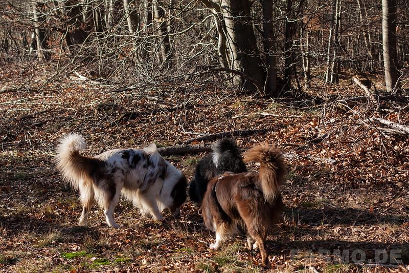 Hunde KW 6 2015