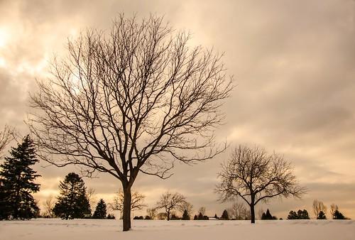 park winter sunset snow weather clouds day cloudy arapahoepark treesinpark cenntenialcolorado projectweathermobileapp