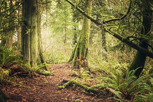 travel trees wild green forest washington moss northwest run hike wanderlust explore trail cedar magical wander trailrunning canon7d