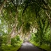 Dark Hedges - North Ireland.