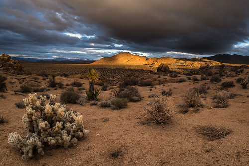 Clouds, Light, Cholla | by Joshua Tree National Park