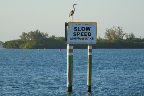 sunset water sign florida manatee egret sebastianinlet slowzone