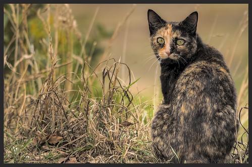 Stray cat.
