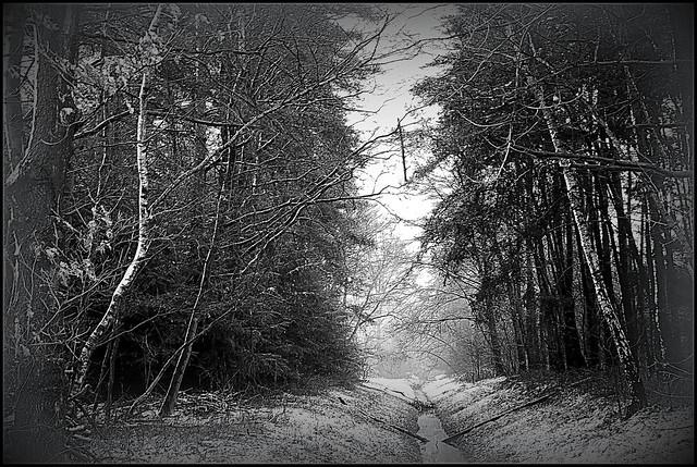 Small brook in winter (in explore 03.02.2015)