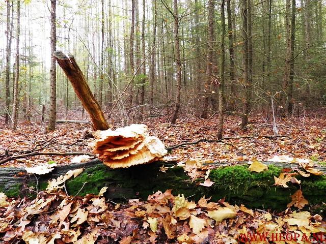20-10-2012     Wedeblick-   Driebergen        25 Km (112)