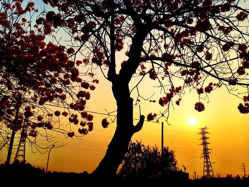 trees sunset highcontrast