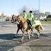 PSNI on Horses in west belfast