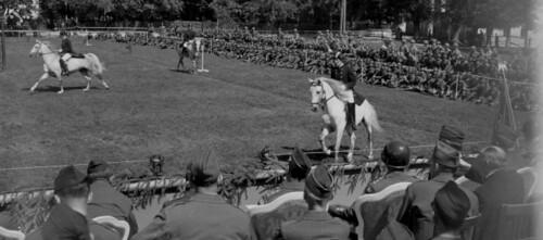 Demostración realizada ante Patton por la Escuela Española de Equitación de Viena