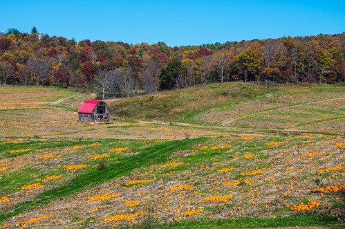 barn october pumpkinfarm 2014 ftchiswellva